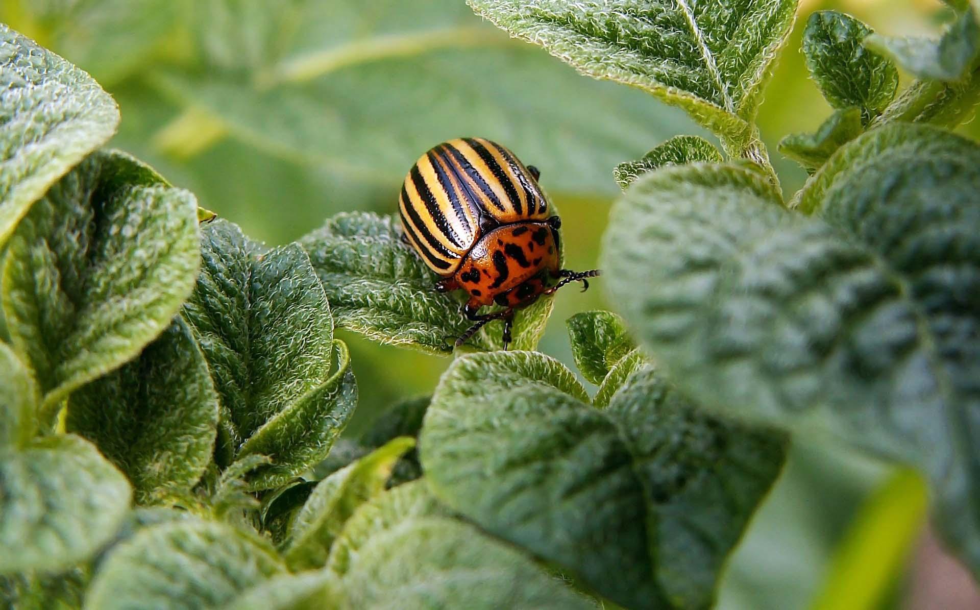 avversita in Agricoltura Biologica