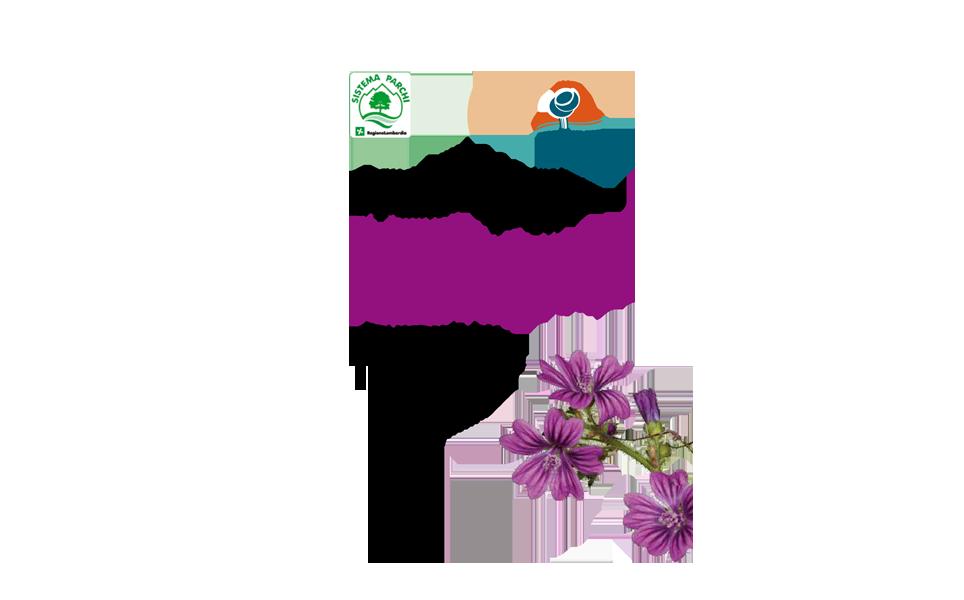 Le piante selvatiche commestibili