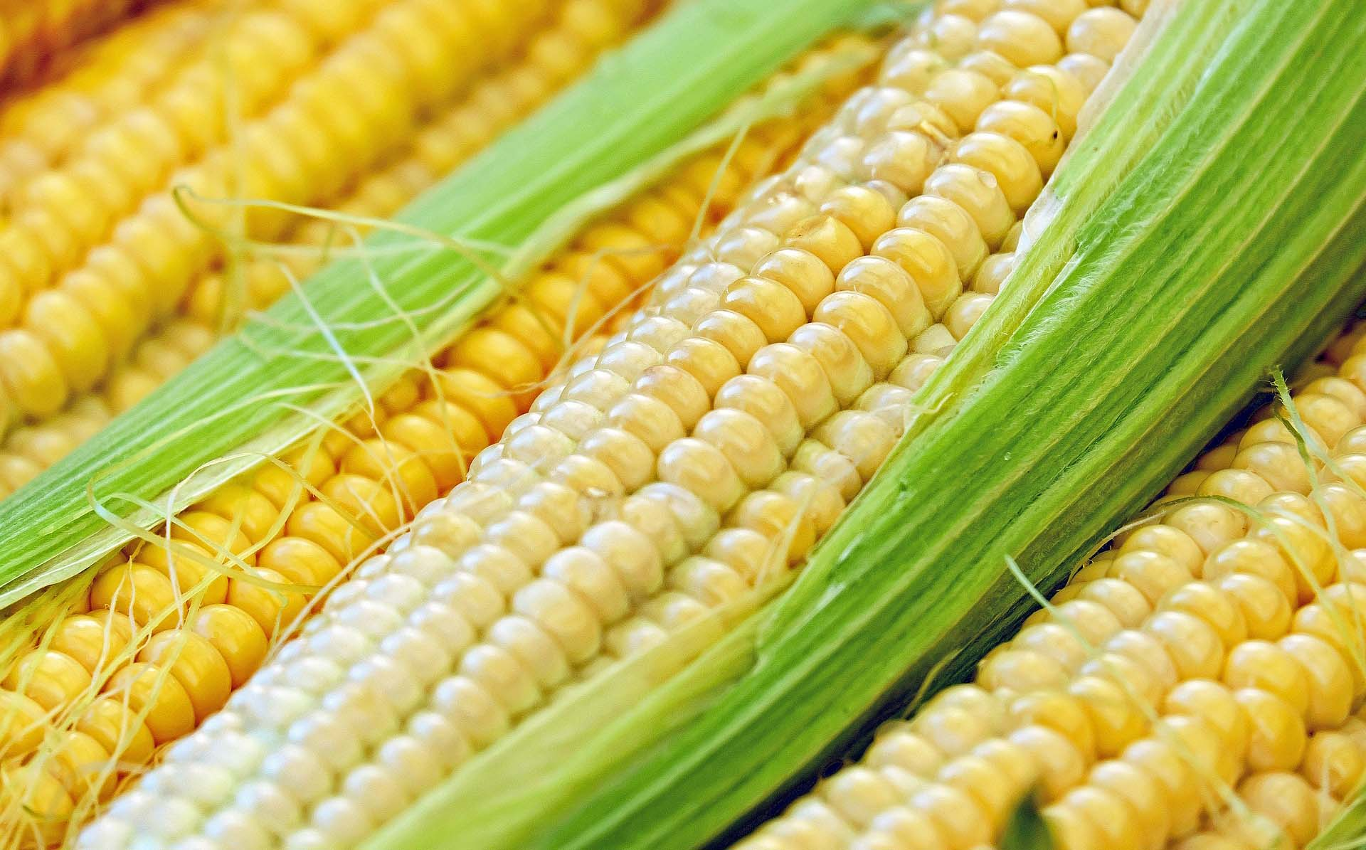 agricoltura biologica e tradizionale